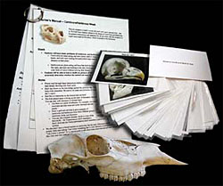 Photo of laminated cards showing animal skulls and a teacher's guide.